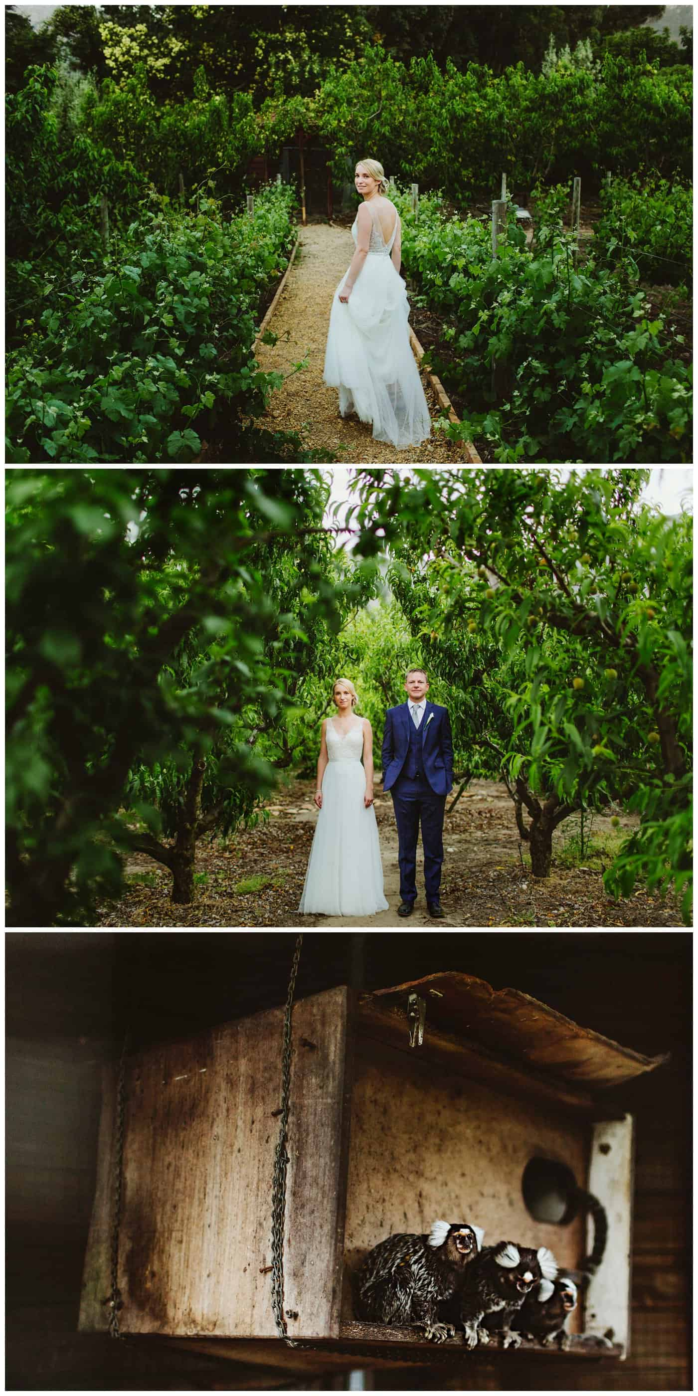 Franschhoek wedding photography