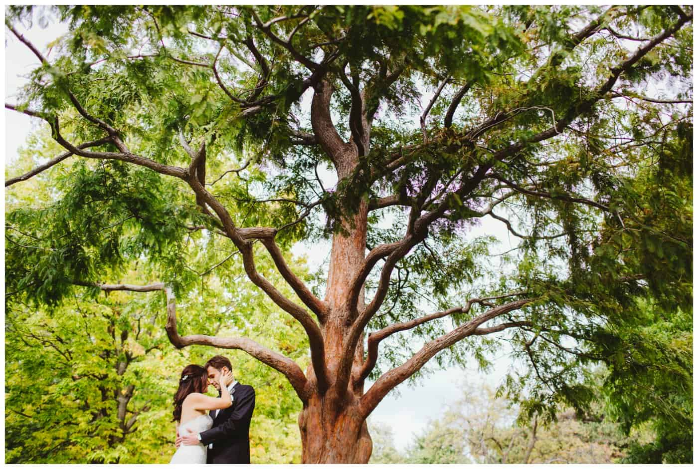 Amazing wedding photo of a couple under a tree at The Windsor Montreal